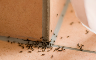 О ловушках для муравьев