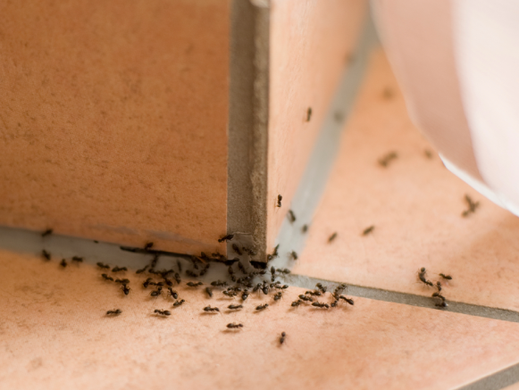 Ловушки для муравьев в саду своими руками 841