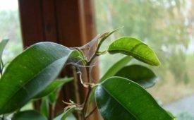 Паутинный клещ на растениях: методы борьбы и профилактика