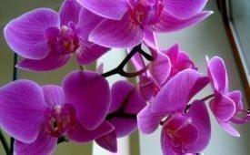 Мошки в комнатных орхидеях