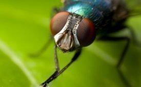 Как можно избавиться от мух на улице