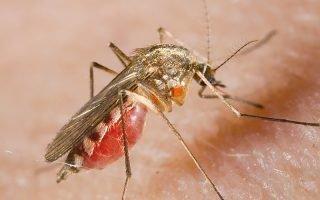 Как выгнать из комнаты надоедливых комаров