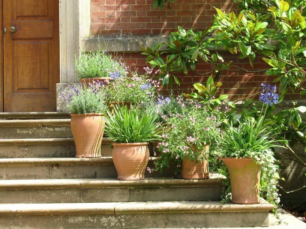 Домашние растения на улице