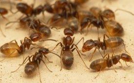 Средство для борьбы с муравьями на даче