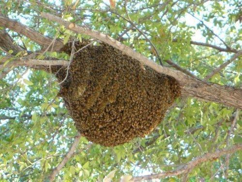 Гнездо пчел