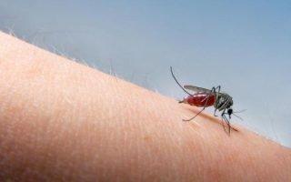 Как  правильно бороться с комарами