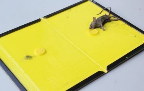 Клеевая доска для мышей