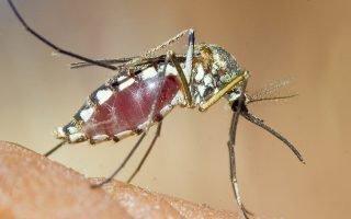 Чего опасаются комары