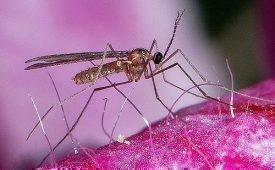 Варианты спасения от комаров