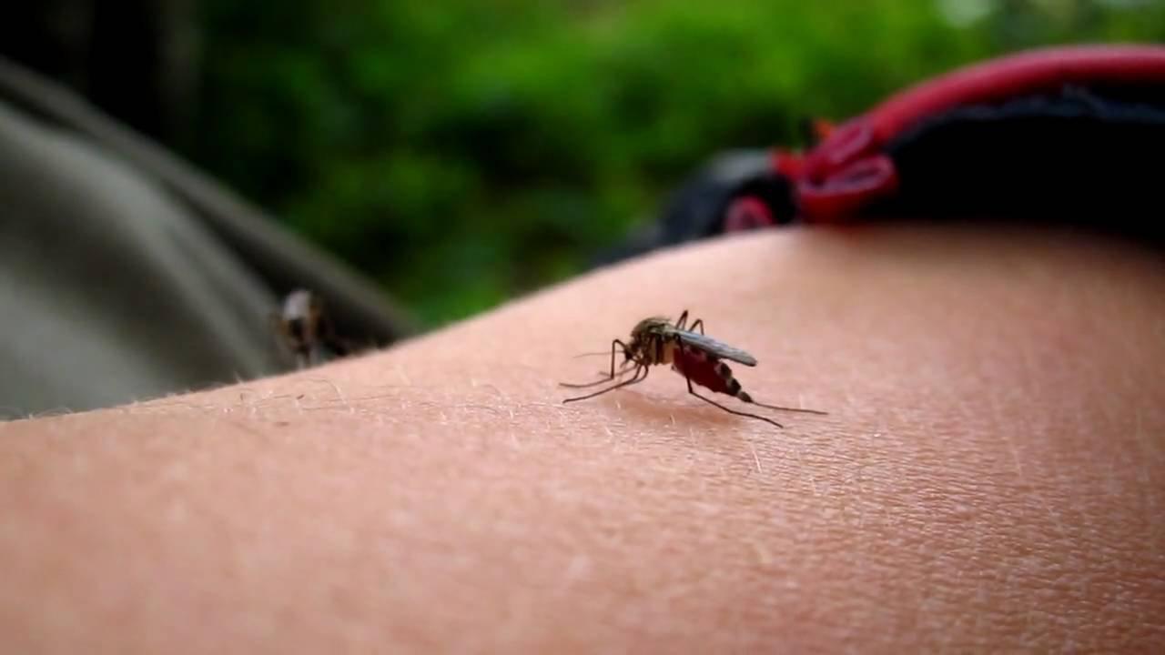 Dengue mosquito bite pictures