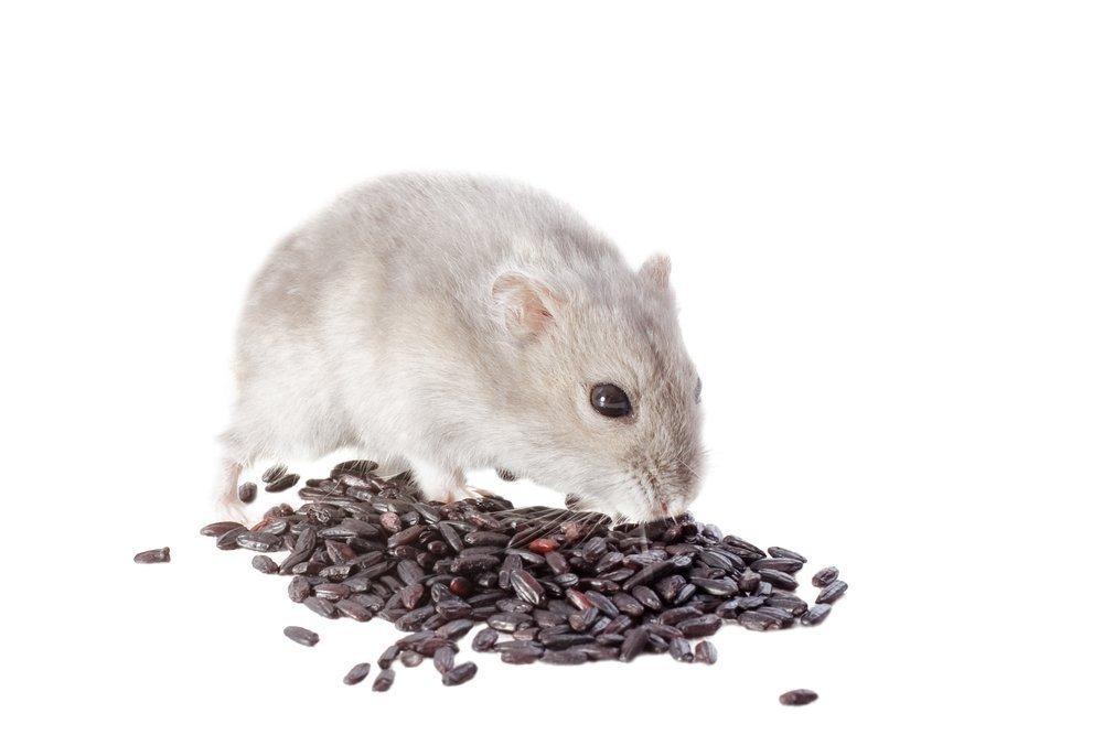 Крысиная отрава