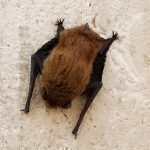 Методы избавления от летучих мышей