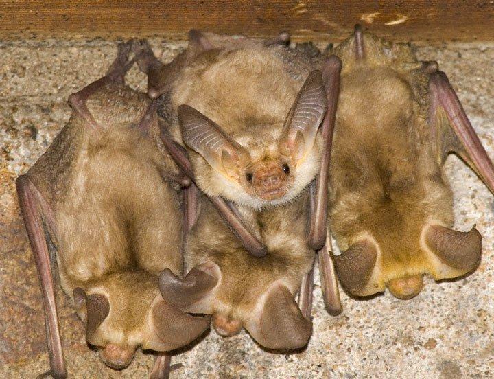 Летучие мыши на чердаке