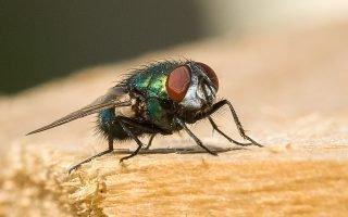 Как в квартире избавиться от мухи: теория и практика
