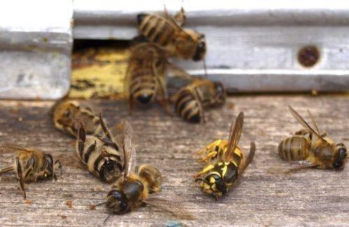 Осы и пчелы