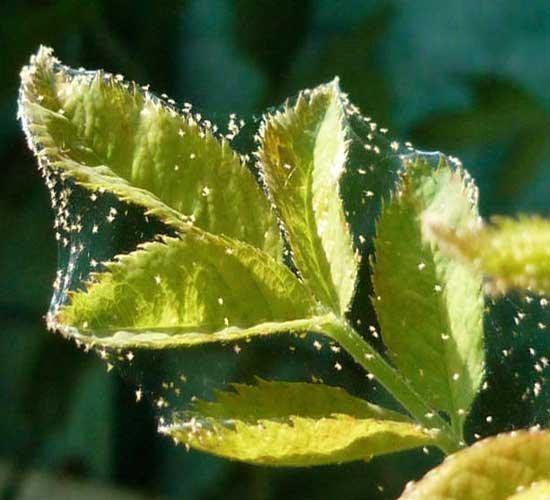 Жемчужная резинка спицами-варианты вязания -Творим - не
