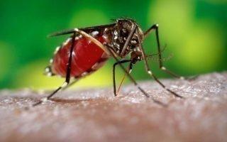 Как быстро избавиться от надоедливых комаров на дачном участке?