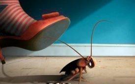 Как вести борьбу с тараканами в домашних условиях