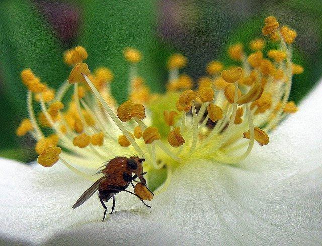 Мошки в цветочных горшках