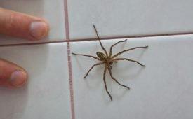 Как избавить частный дом от пауков