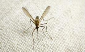 Как можно защитить себя от назойливых комаров