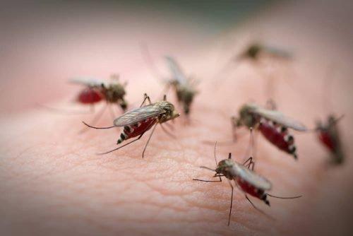 Избавиться от комаров и мошек