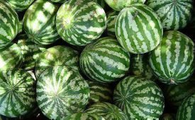 Как хранить арбузы: популярные способы