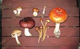 Где, как и сколько хранить грибы в домашних условиях