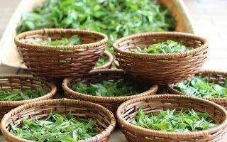 Правила и сроки хранения листового чая
