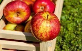 Особенности хранения яблок